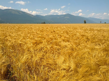 farm to market grains.jpg