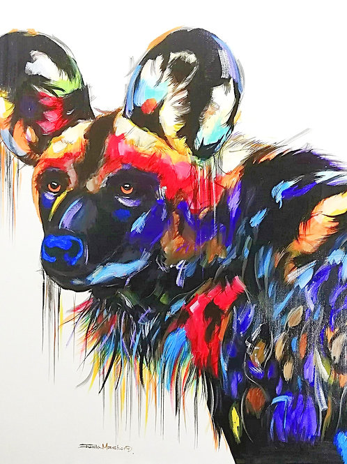 PAINTED DOG 20