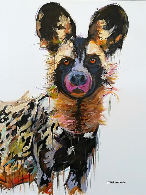 PAINTED DOG 5