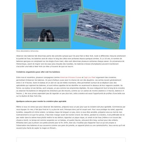 Observer des Baleines : une activité insolite et inattendue à New York
