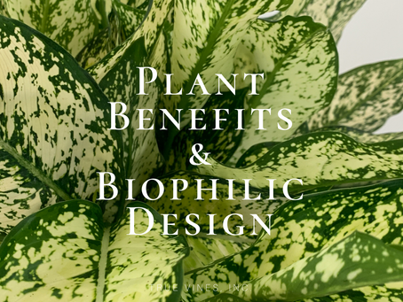 Plant Benefits & Biophilic Design