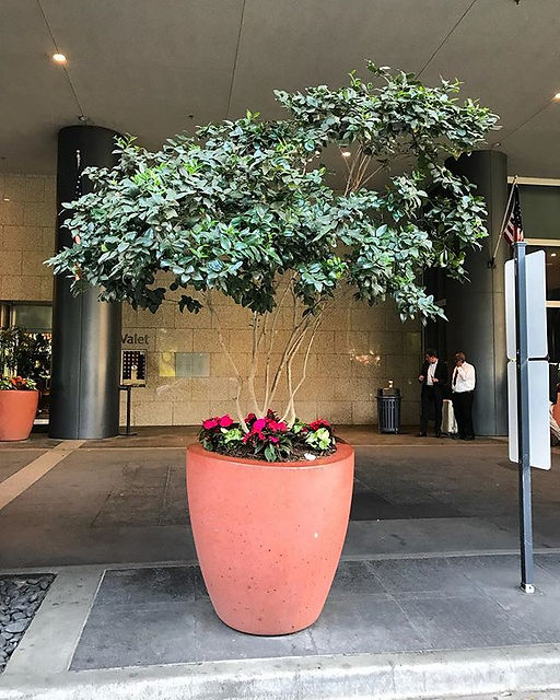 Beautiful exterior #ligustrum with base