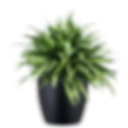 Aglaonema-Cutlass_Low_Light.png