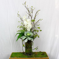 Just arranged a little succulent love! O