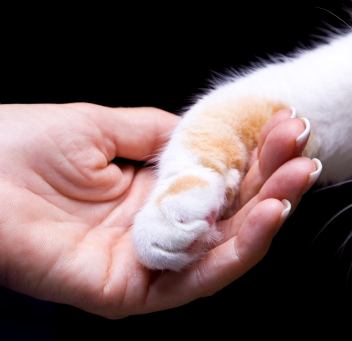 cat-paw-and-humand-hand