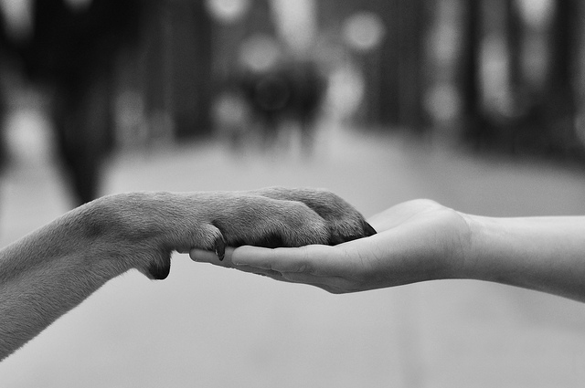 hand-paw.jpg