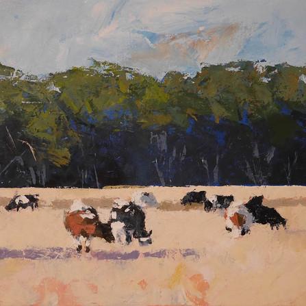 10.5 cows.jpg