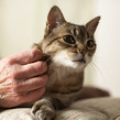 Hand patting a tabby cat