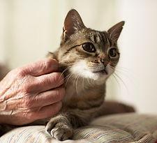 Kitty Царапина
