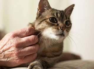 How Home Care Services Help People Stay with Animal Companions
