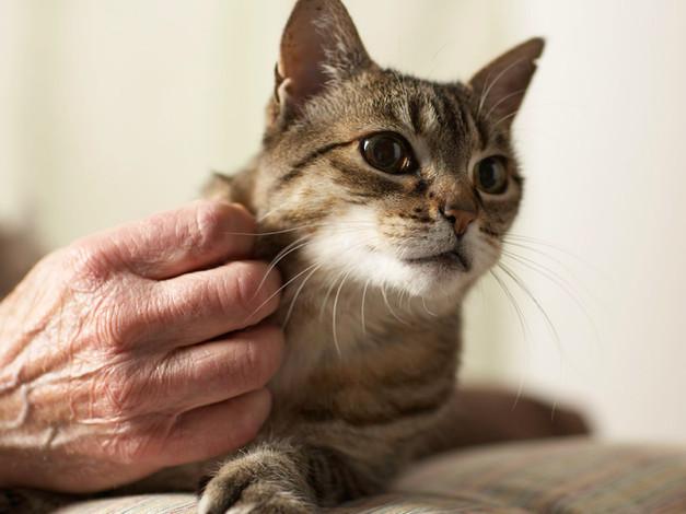 Kitty Raspadinha