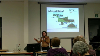 Agroforesterie, Aspects législatifs