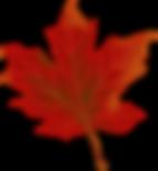 leaf-984998_960_720.png