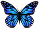 Blue_Butterfly_PNG_Clipar_Image.png