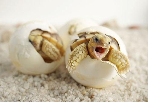 Juan Ferri tortugas - copia.jpg