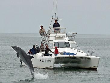 Safari marin.jpg