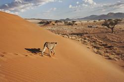 Namibie - Désert du Namib
