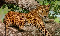 Botswana - Chobe National Park