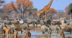 Namibie - Etosha National Park