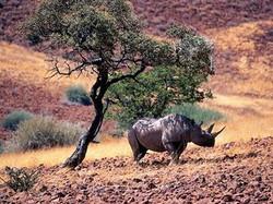Namibie - Concession privée de Palmwag