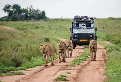 Safari_guidé
