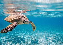 Seychelles animals.jpg