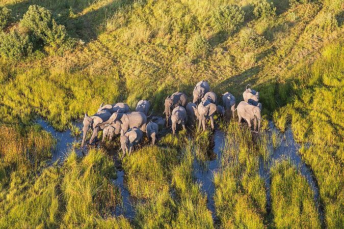 elephants-okavango-delta.jpg