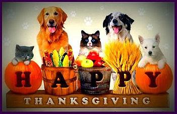 Thanksgiving dog.jpg