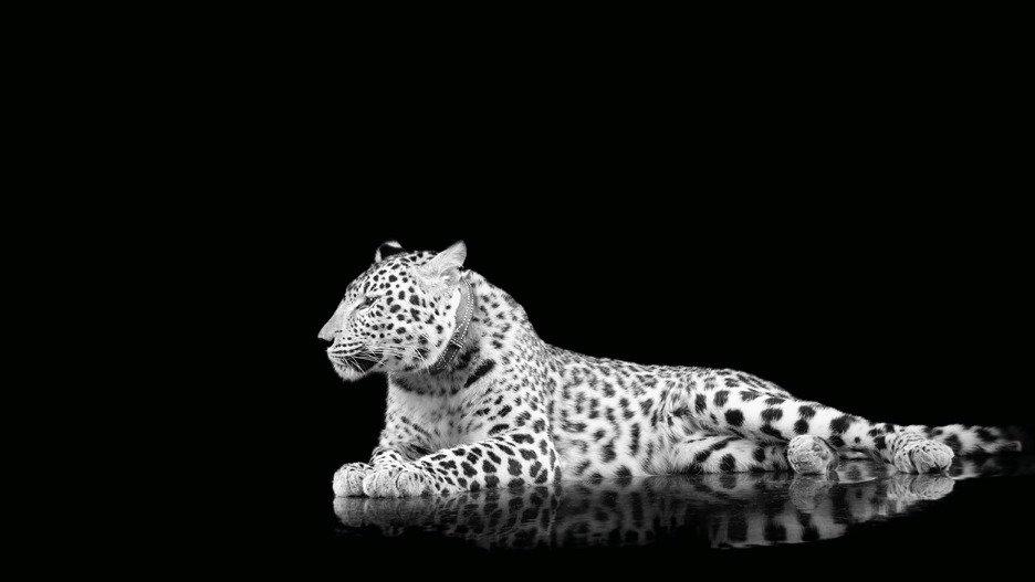 cheetahEandP_edited_edited.jpg