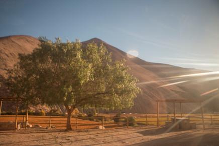 Pisco Elqui, Chile