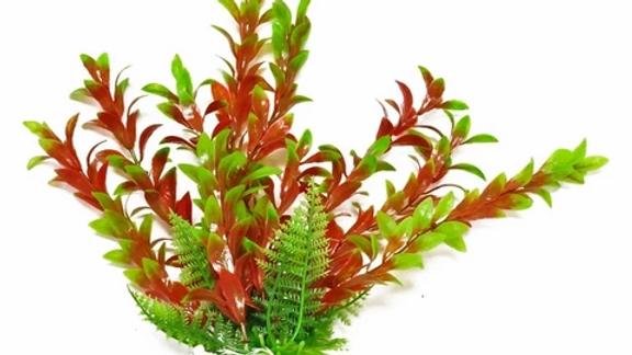 Aquatop Aquatics aquarium plants