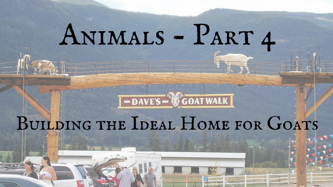 Animals - Part 4: Building the Ideal Home for Goats