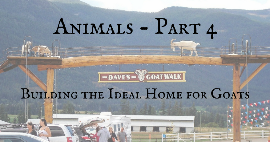 Building the Ideal Home for Goats