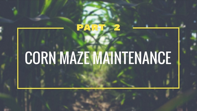 Corn Maze Maintenance - Part 2