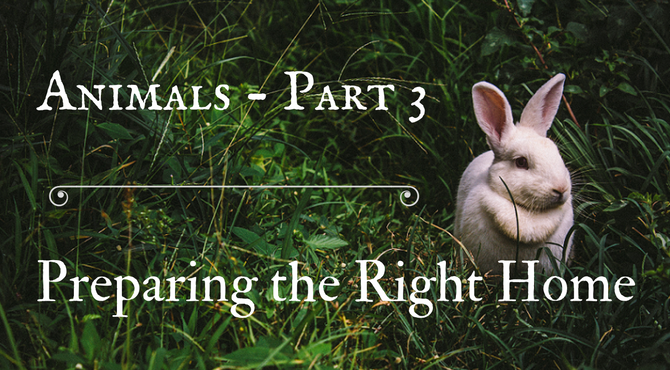 Animals - Part 3: Preparing the Right Home