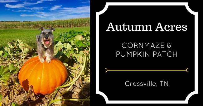 Autumn Acres Cornmaze & Pumpkin Patch