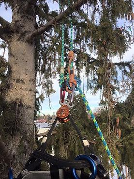 Edmonton Tree Removal