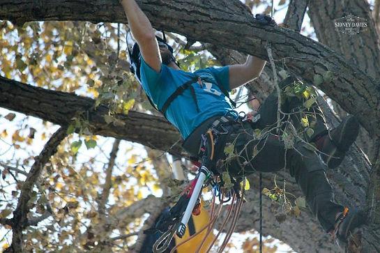 Tree Removal Edmonton