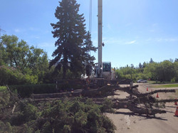 Crane assisted removal in Mundare