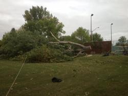 Tree Removal, Devon, Ab