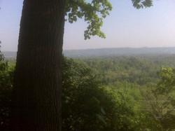Niagara Escarpment, Oak Pruning