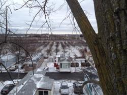 Poplar Removal, Ontario