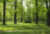 Eichenwald bei Erlangen