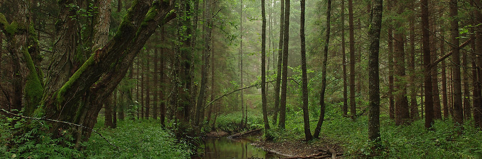 Tarvasjõgi Estland