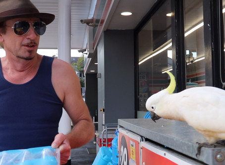 Craig the Cockatoo Cases the 7/11