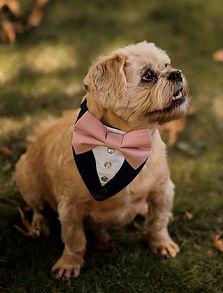 Dog tuxedo bandana