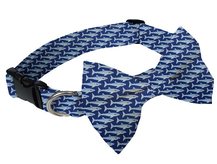 Shark Collar (Bow Tie Optional) - From $30