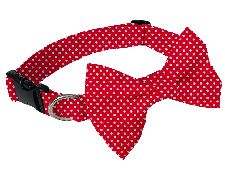 Polka Dot Collar (Bow Tie Optional) - From $30