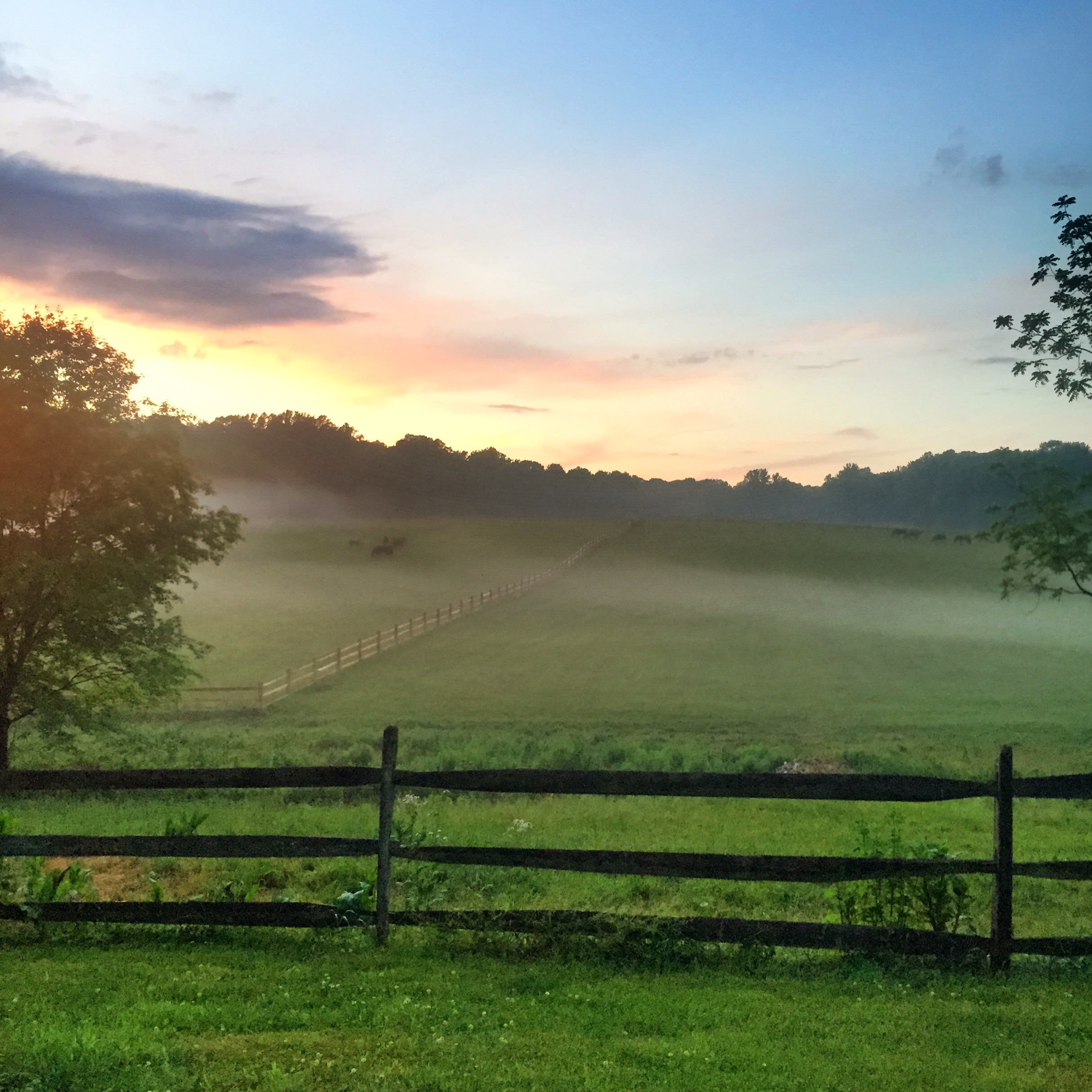 Morning mist in the north fields