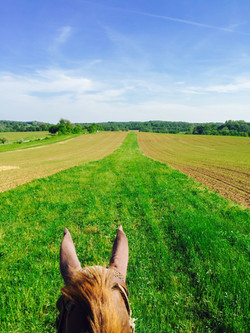From the top of the gallop